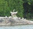 Heron enjoying Canoeshuk